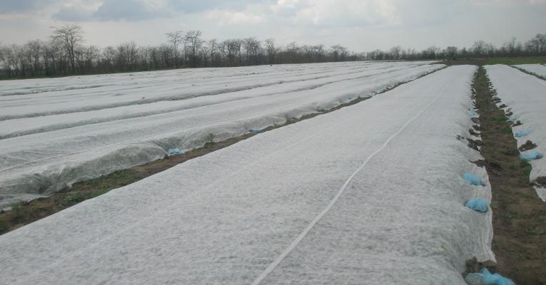 Применение спанбонда в различных отраслях хозяйства